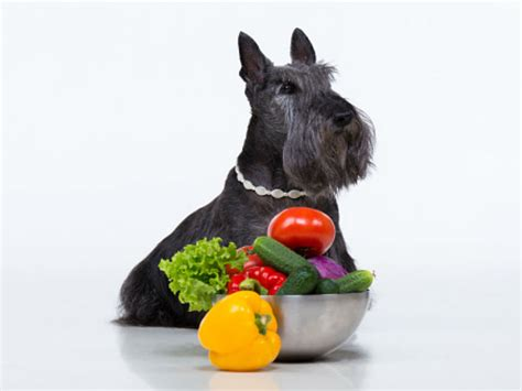 are onions bad for dogs can dogs eat onions american kennel club