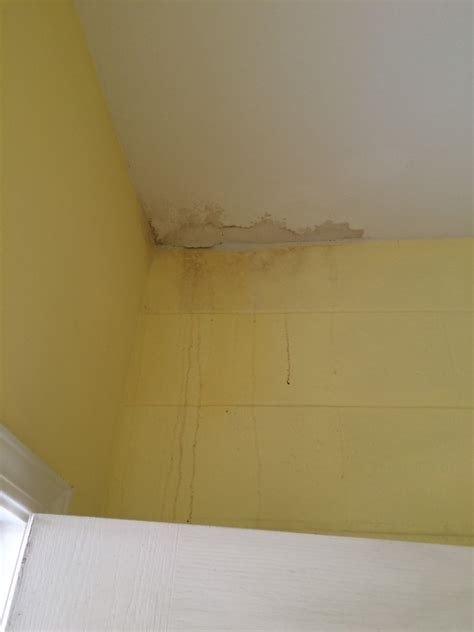 how to check your house for mold how to check your house for mold 28 images black mold removal in livingston county