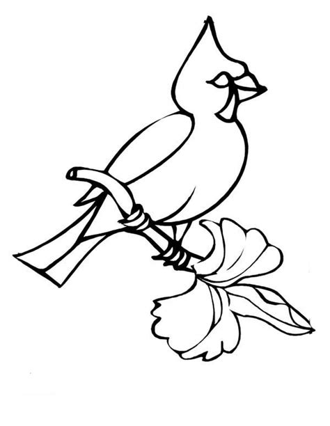 winter cardinal coloring page cardinal basketball coloring pages