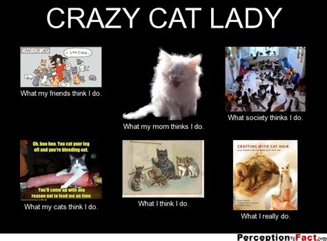 Crazy Dog Lady Meme - crazy cat lady what people think i do what i really