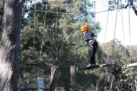 flying fox on each level picture of treetop adventure