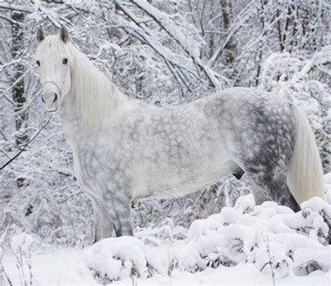 Cavallo Pomellato by Natura Spettacolare Paesaggi Innevati Immagini