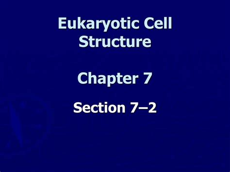 Section 7 2 Eukaryotic Cell Structure by 69 Section 7 2 Eukaryotic Cell Structure Pages 174 181