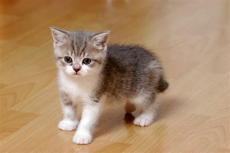 your cat how do i choose a healthy kitten kitten care