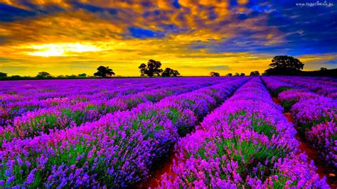 taman bunga terindah  dunia dewa berita