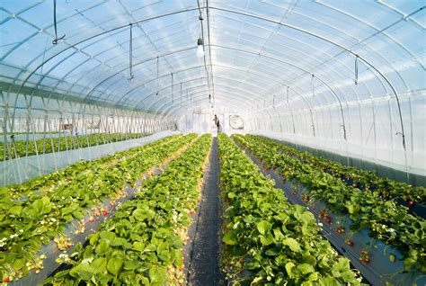 Green House by File Strawberry Greenhouse Jpg Wikimedia Commons