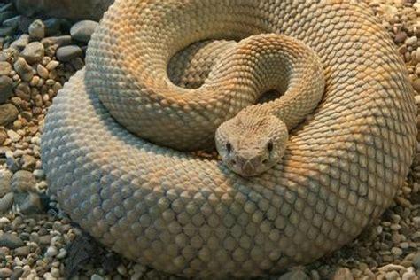 popolare di salerno salerno trovano serpente di 2 metri nell immondizia