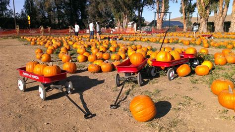 haircut coupons livermore ca livermore pumpkin patches livermore rocks