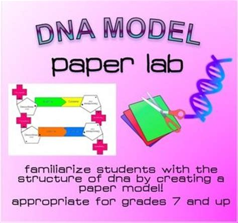 How To Make A Dna Model With Paper - dna structure lab paper model models student and paper