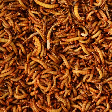 dried mealworms 1lb 4 oz from my pet chicken