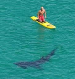 Upholstery Hawaii New Blog 1 Paddle Surf Hawaii