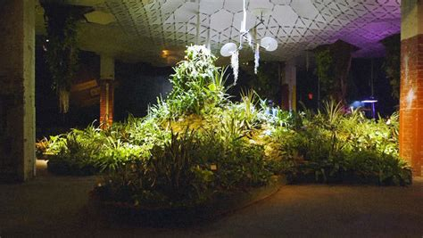 plants that grow in dark rooms inside the lab where plants learn to grow in the dark co