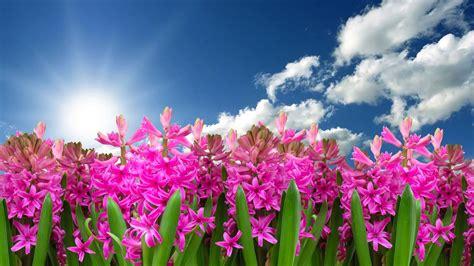 immagini fiori per desktop immagini paesaggi primaverili per desktop