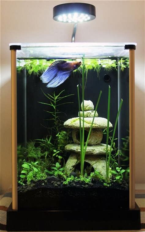 aquarium design betta 11 best images about betta fish tank setup ideas on
