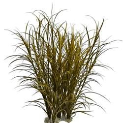 ornamental grass png image mag