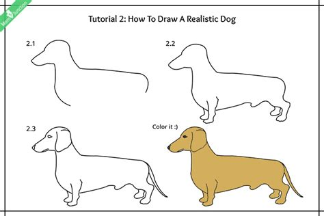 how to draw for how to draw pets for a step by step drawing book for kawaii pets dogs cats birds fishes horses pigs 9 12 boys volume 2 books step by step guide on how to draw a for