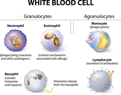 the amoeba sisters ever wonder about the specialized cells in a
