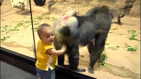 baby   baboons ass youtube