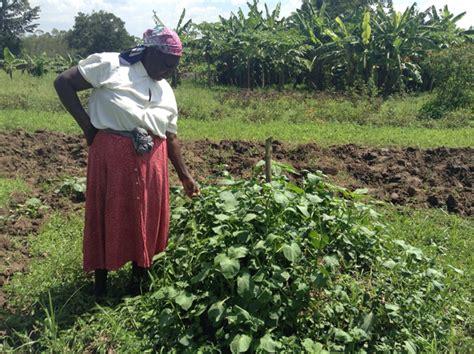 Kitchen Garden Farming In Kenya Kitchen Gardens Are Victory Gardens In Boosting Nutrition
