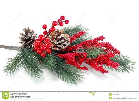christmas tree branch with red berries stock images