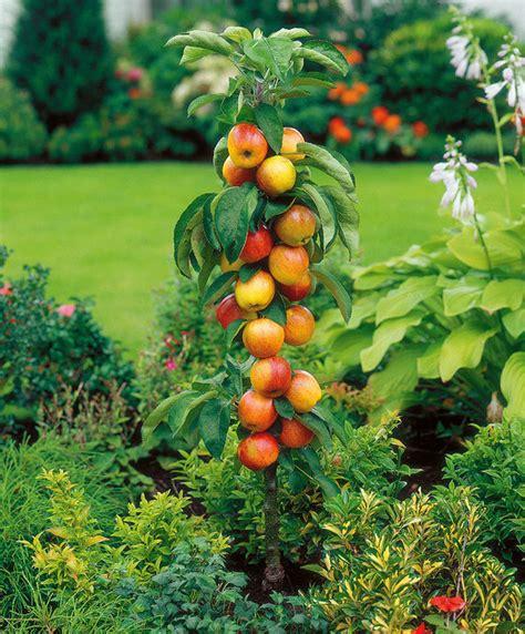 coltivare in vaso come coltivare gli alberi da frutto in vaso