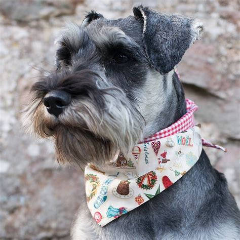 puppy bandanas bandanas by redhound for dogs notonthehighstreet