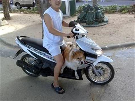 Motorrad Fahren Mit Hund by Familien Ausflug Nach Pattaya Thailand Forum