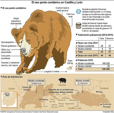 i si estigussim en 191 y si el oso ataca leonoticias com