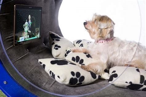 new technology for dogs samsung made a 30 000 high tech dog house geek com