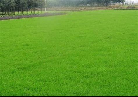landscaping murfreesboro tn murfreesboro tn order lawn service from hill lawncare