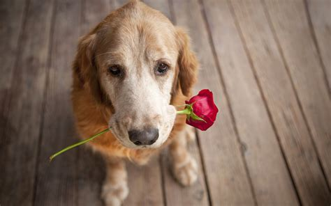 puppy flowers and flower wallpapers and images wallpapers pictures photos
