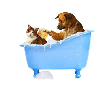 dogs bathtub dog bathing systems roswell kitchen bath dog bath