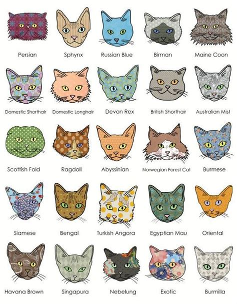 types of cats know your cat breeds the face shapes are correct but