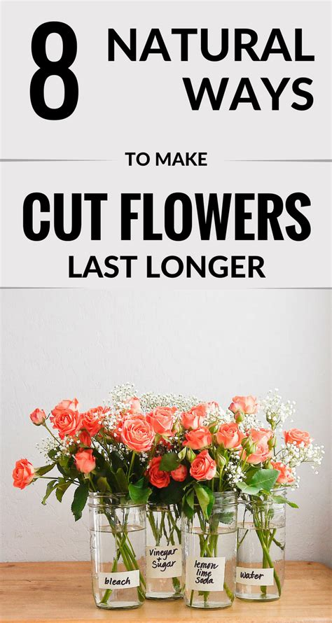 8 Ways To Get Makeup To Last Longer by 8 Ways To Make Cut Flowers Last Longer