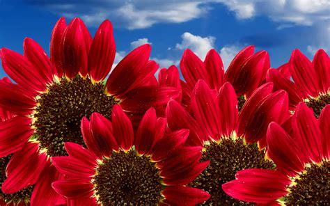 foto hd fiori sfondi hd fiori per desktop primavera sfondi hd gratis