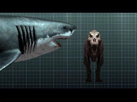 imagenes reales de un megalodon loquendo la historia del tibur 243 n megalodon el m 225 s gigante