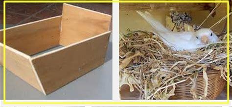 Sarang Walet Pakan Lovebird bahan sarang bertelur kenari arsip situs burung berkicau
