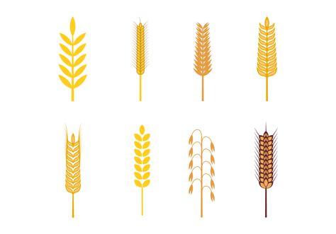 free vector free oats vector free vector stock