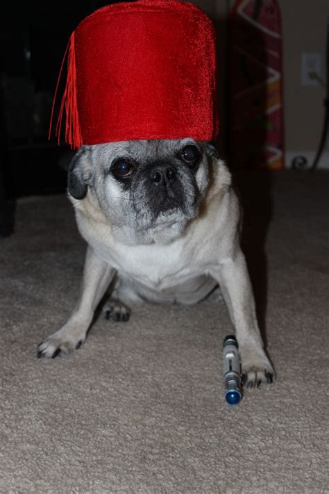 dr who pug pug doctor doctor who the last of the timelords