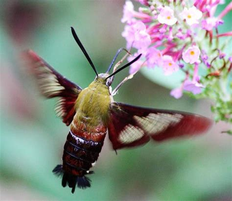 butterfly season in florida florida eco travel guide
