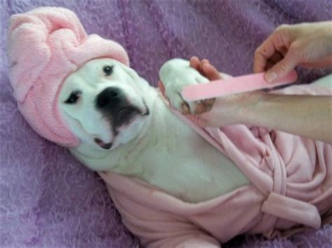 spa city puppies spa things pictures to pin on pinsdaddy