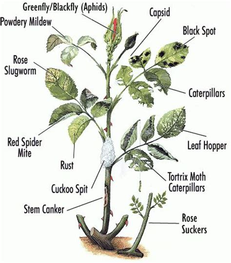 30 best images about plant diseases on - Plant Disease Report