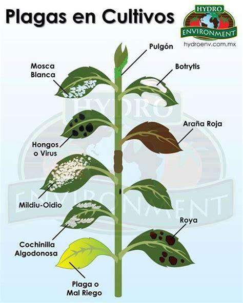 enfermedades de las plantas de interior plagas plagas y enfermedades en plantas pinterest