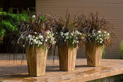 grasses  containers hgtv