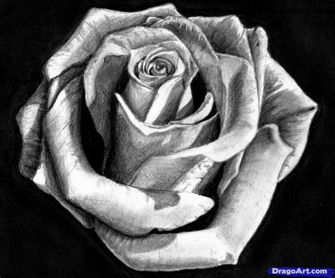 rose tattoo tutorial how to draw a in pencil draw a realistic step