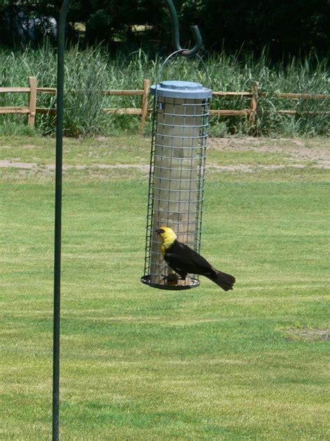 malheur migratory bird refuge harney county oregon