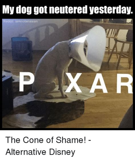 Cone Of Shame Meme - 25 best memes about cone of shame cone of shame memes