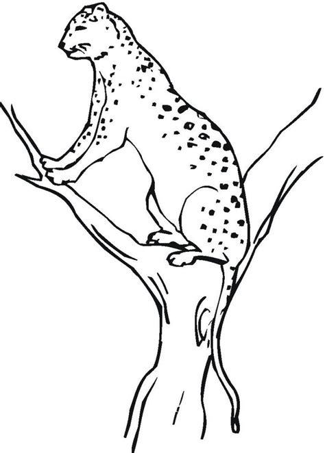 Coloring Page For by Free Printable Cheetah Coloring Pages For