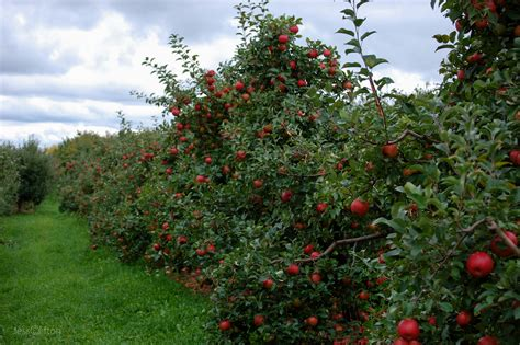 apple orchard absolute autumn orchard day in pictures why michigan