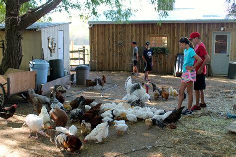 backyard farm animals backyard farm animals 28 images triyae backyard